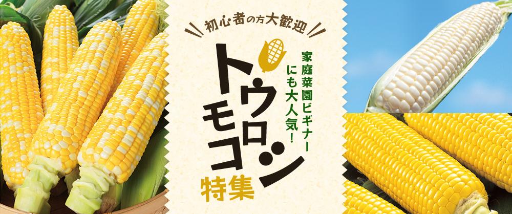 初心者の方大歓迎 家庭菜園ビギナーにも大人気!トウモロコシ特集